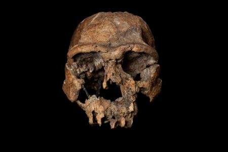 The remains of a Homo erectus skull. From Almost Human by Lee Berger